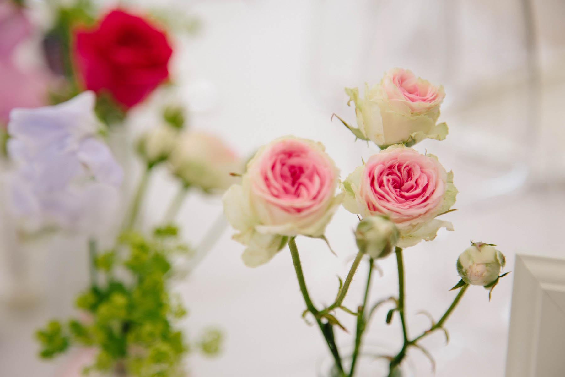 kärnten rosa rote rosen günstig